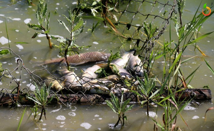 Güzelyurt Göletinde Balık Ölümlerinin Nedeni Araştırılıyor