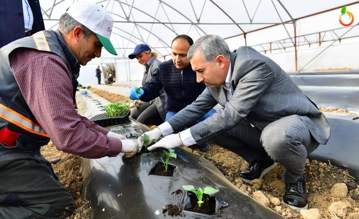 Başkan Çınar, 'Seracılıkta 21 bin 225 kilo doğal ve organik ürün hasadı yapıldı'