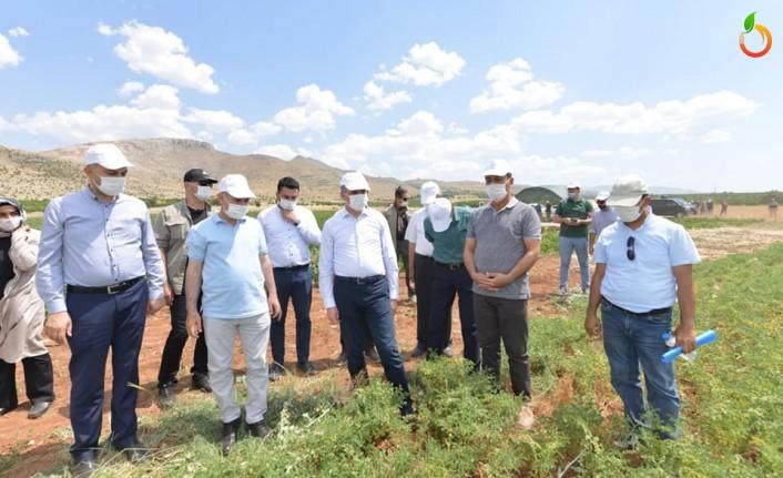 'Yeşilyurt Belediyesi Tarımsal Hizmetlerde Büyük Bir Mesafe Kat Etti'