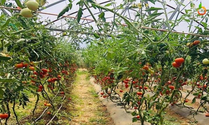 Yeşilyurt'ta tarım projeleri artıyor