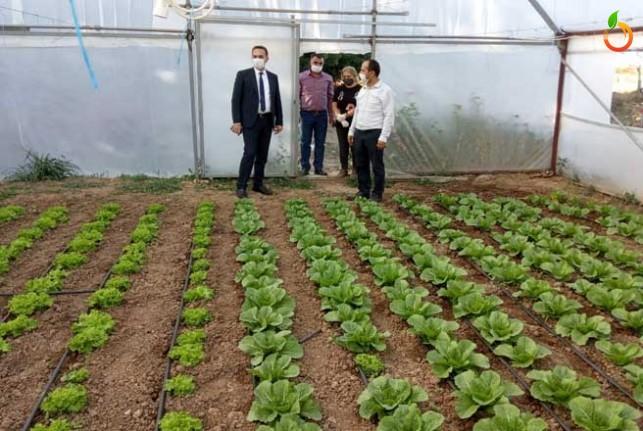 Yeşil Gıda Seracılık alanında ürün çeşitliliğini artıyor
