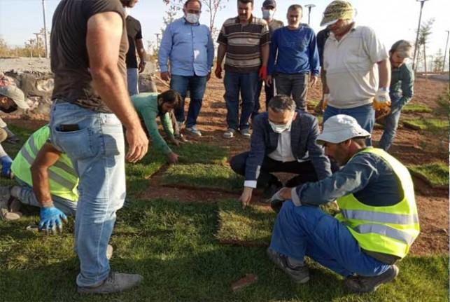 Yeşilyurt Belediyesi 15 Bin Metrekare Rulo Çim Üretti