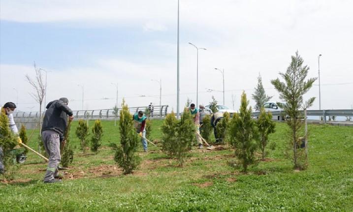 Büyükşehir Belediyesi Parkları Ve Refüjleri Yenileniyor