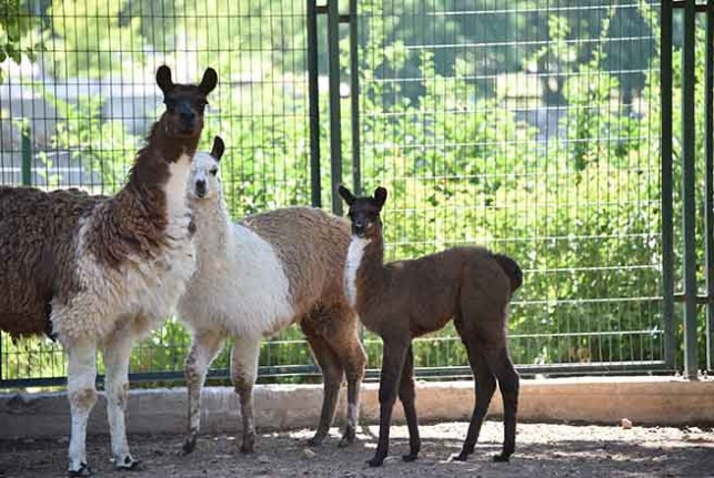 Hayvanat Bahçesi 78 Türden 1250 Hayvana Ev Sahipliği Yapıyor