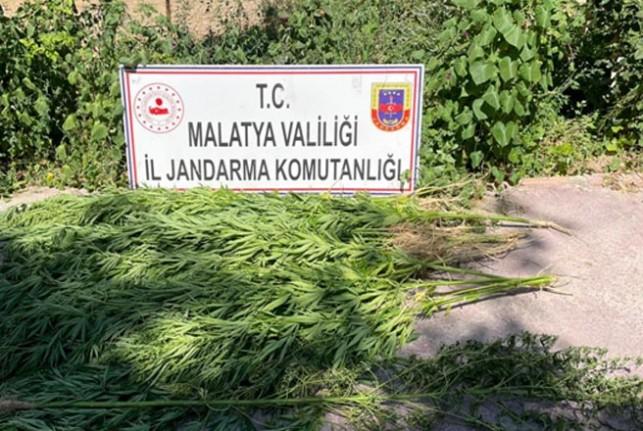 Malatya'da 67 kök kenevir ve 2 kilo kubar esrar ele geçirildi
