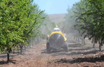Kayısı Ağaçlarında  İlaçlama Programı