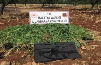 Malatya'da kaçak kenevir  ele geçirildi