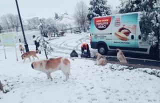 Büyükşehir Belediyesinden hayvanlara şefkat eli
