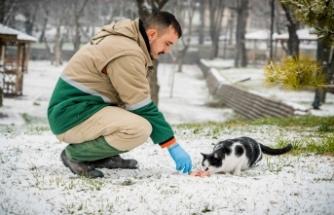 Büyükşehir Belediyesi sokak hayvanları için doğaya yiyecek bıraktı