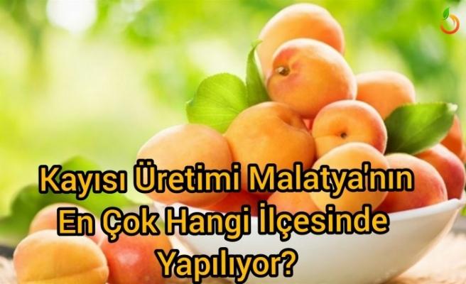 Malatya'da kayısı üretimi  en çok hangi ilçede yapılıyor ?