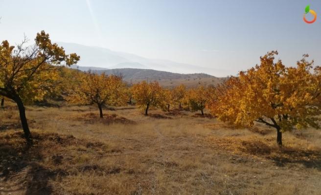Tarım Arazileri Dronlar İle Gözlemlenecek