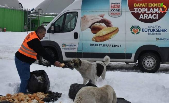 Büyükşehir Belediyesi Hayvan İçin Doğaya Yiyecek Bıraktı
