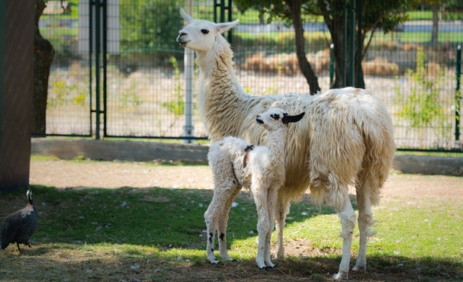 Hayvanat Bahçesinin Yeni Üyeleri Yoğun İlgi Gördü