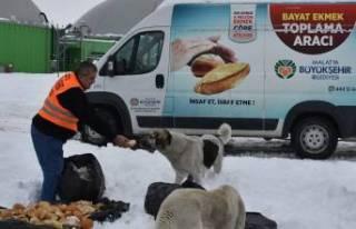 Büyükşehir Belediyesi Hayvan İçin Doğaya Yiyecek...