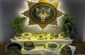Malatya'da Narkotikten Çiftlikteki Villaya Uyuşturucu Baskını