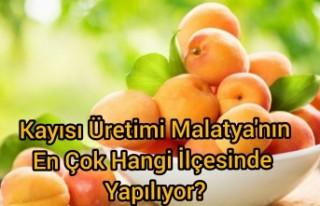 Malatya'da kayısı üretimi en çok hangi ilçede...