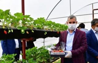 'Çiftçilerimize 100 Bin Adet Sebze Fidesi Dağıtıyoruz'