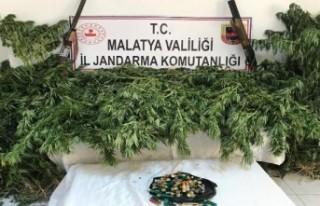 Malatya'da Yasa Dışı Kenevir Ekenlere Operasyon