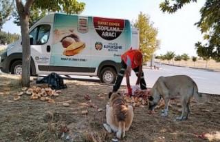 Malatya'da Günlük 200 Kg Bayat Ekmek Toplanıyor