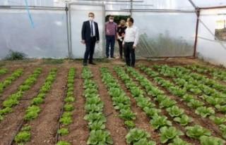 Yeşil Gıda Seracılık alanında ürün çeşitliliğini...