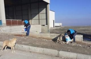 Battalgazi Belediyesi Can Dostlarını Unutmadı