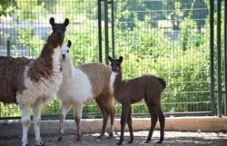 Hayvanat Bahçesi 78 Türden 1250 Hayvana Ev Sahipliği...