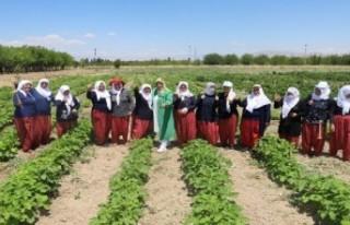 Batkoop'un gönüllü kadınları, ilk hasatlarını...