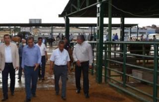Ramazan Özcan, canlı hayvan pazarını ziyaret etti