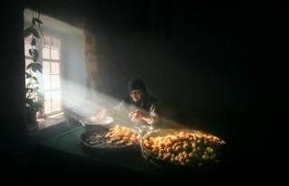 Ulusal Battalgazi Kayısı Hasadı Fotoğraf Yarışması...