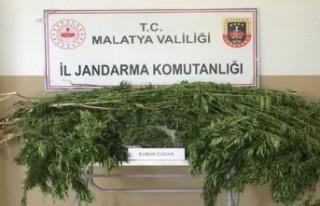 Malatya'da 1 kilo esrar ele geçirildi