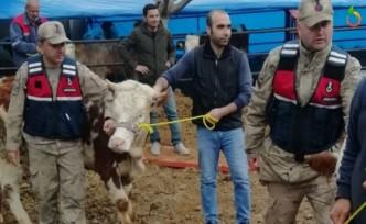 Jandarma at ve inek çalan hırsızları yakaladı