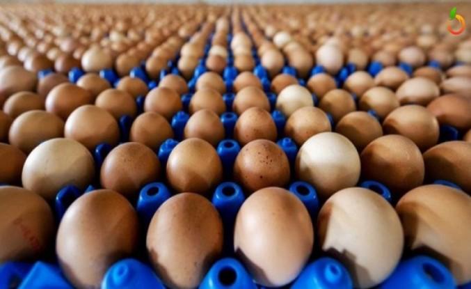 Yumurta'da ki Fiyat Artışından Vatandaş Şikayetçi